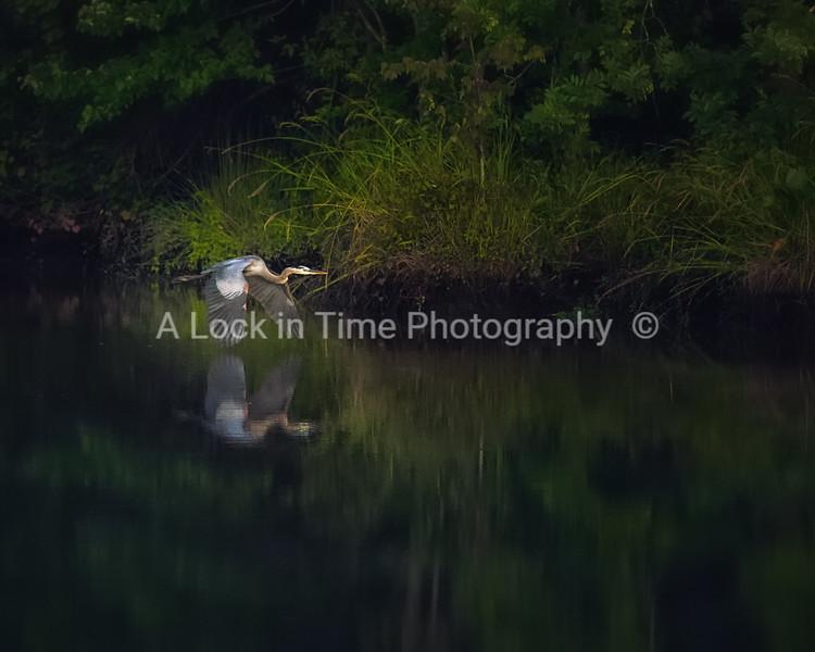 Egret near Eatonton