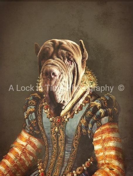 Pet_portrait_background_3 copy