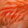 The delicacy of Flamingo feathers