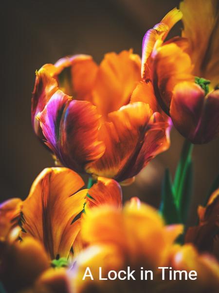 april tulips