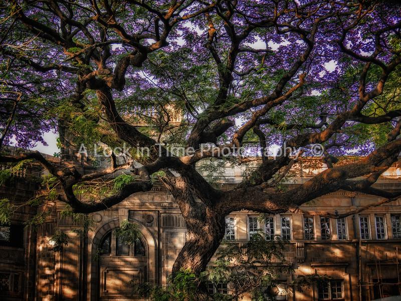 mumbai magic tree