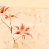 flower in room