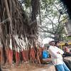 big giant roots