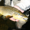 a typical thredbo brownie with amazing colouration