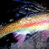 Exquisite colours of a thredbo rainbow