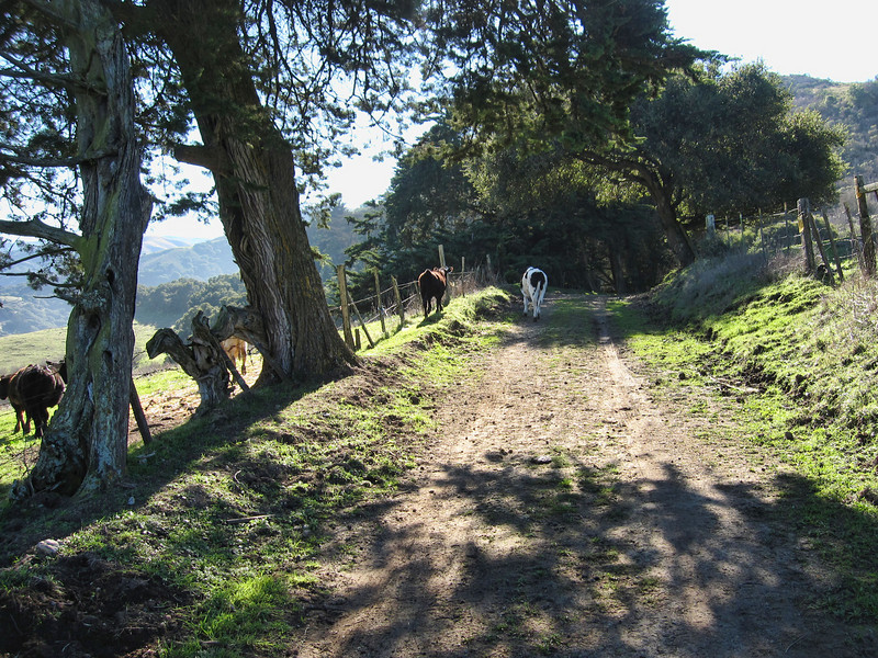 de Anza Trail 1:18:2011 11