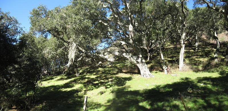 de Anza Trail 1:18:2011 20