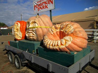 UesugiFarm Pumpkin Park 7