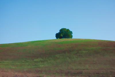 Lone Tree I