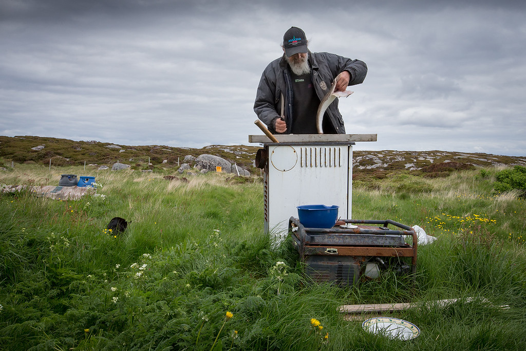 Man cutting fish. On a small island called Risøy on the Norwegian coast. The island has no tapwater or electricity.