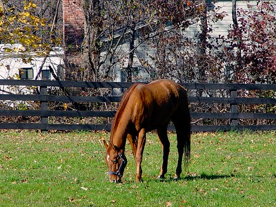 Echo Lake Stables in West Milford New Jersey