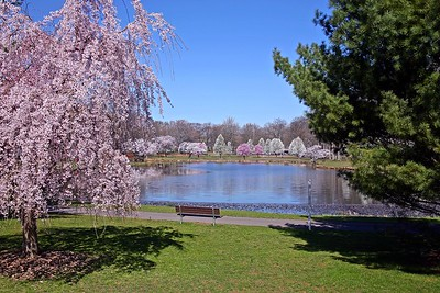 Spring in Nomahegan Park In Cranford, NJ