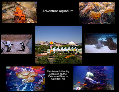 Adventure Aquarium Camden, NJ