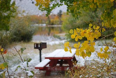 2008 fall color, eastern sierra