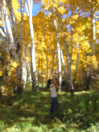 2011, fall color at eastern sierra