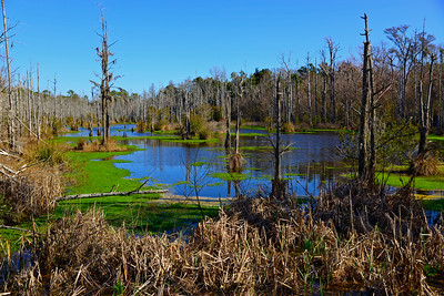 Wetlands in Moss Point