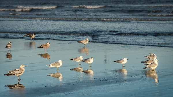 Home for Seagulls