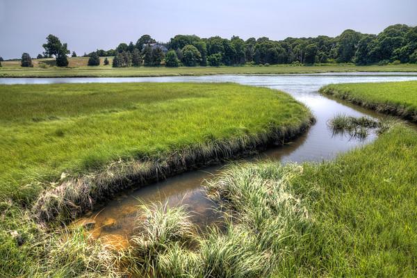 Salt Pond Marsh