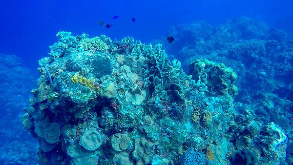Ciesla -GOPR1416 Tues Coral-0004