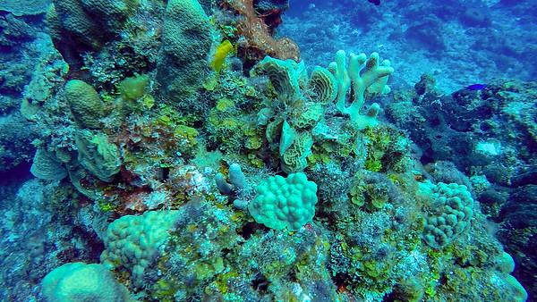 Ciesla -GOPR1416 Tues Coral-0001