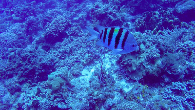 Ciesla -GOPR1419 Tues Striped Fish
