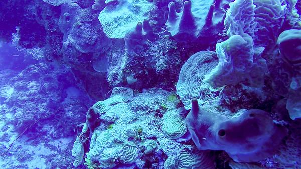 Ciesla -GOPR1418 Tues Corals