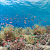 Pristine coral reef with lots of fish