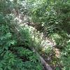 Green Gables National Park