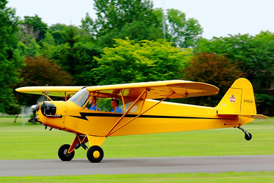 N42574 - As a 'Cub' Lifts It's Tail!