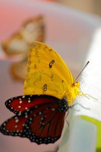 Butterflies in Conversation!