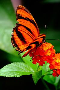 'Flutter' at the Cleveland Metroparks Zoo!