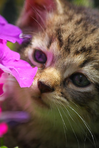 A Moment to Smell the Flowers!