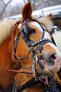 A Horse Named 'Maggot'!