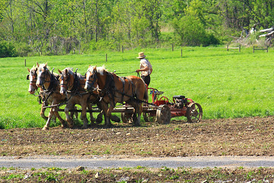 Working an Amish Farm!  © 2010 Paul L. Csizmadia  All Rights Reserved  No Use Allowed without Permission  View on black  On an 'Amish Farm' along the Eastern shore of Seneca Lake, south of Lodi, NY in the central Finger Lakes Region of NEw York State.