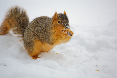Just Nuts About Winter!