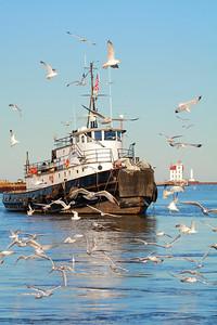 Tug 'Manitou' & a Few Gulls!