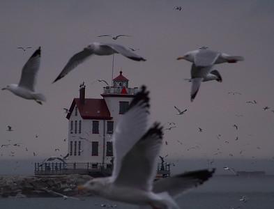 Gull Effect!