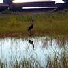 Heron Reflections!