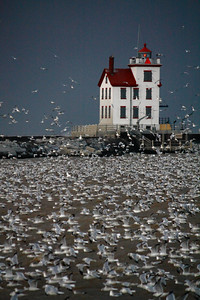 Just a Gull or Two or Three .......!