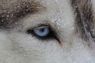 Krighten's Eye!