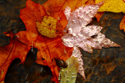 Autumn's Handiwork - Beneath the Surface! ------               © 2009 Paul L. Csizmadia / Spec3 Photography  All Rights Reserved  No Use Allowed without Permission