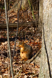 Enjoying the 1st Day of April!  The 1st of April, and this squirrel seems to be content enjoying the Sun's rays along the Vermilion River in Lorain County.