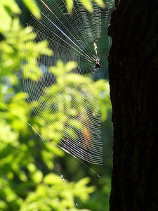 Web in the Woods!