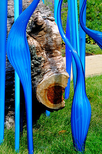 Among the Fallen Wood! - 'Chihuly' at Franklin Park Conservatory!