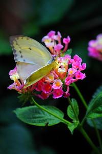 Enjoying the Nectar!