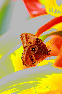 The Butterfly and a Piece of Art - A 'Buckeye' (Junonia coenia) in Abstract!