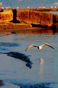 Morning Gull!