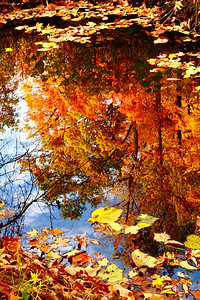 Reflection of Autumn!