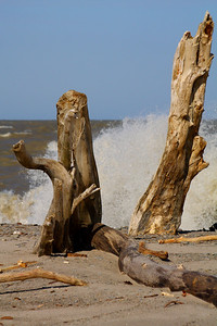 Driftwood Tiki Pals!