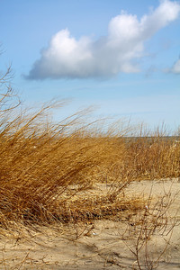 Along the Dunes!